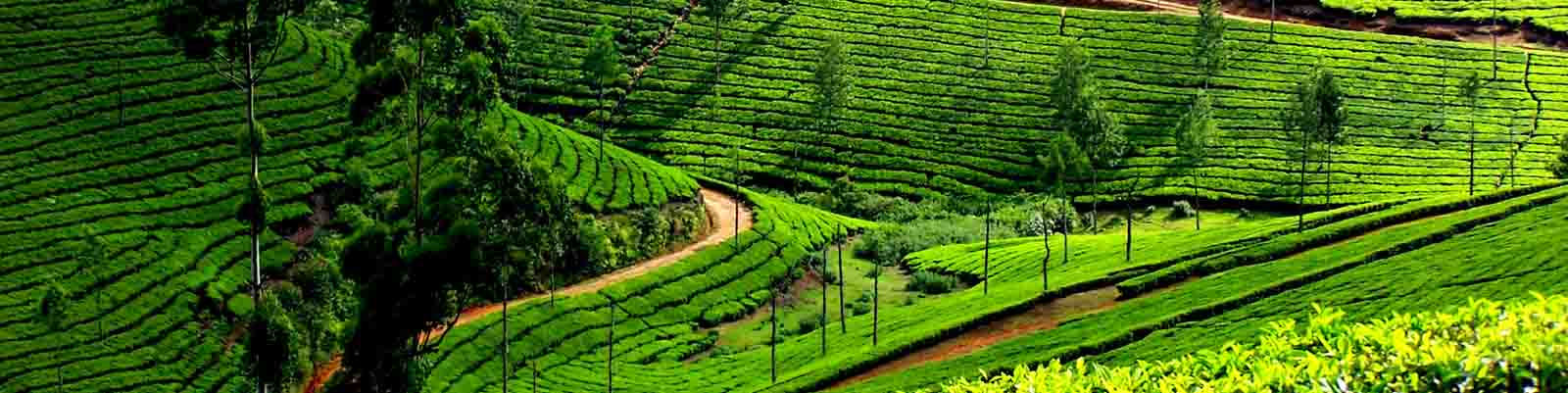 kerala tour and honeymoon packages from Raipur
