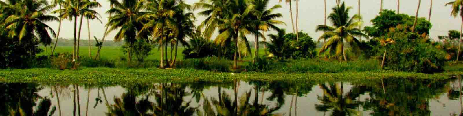 kerala tour and honeymoon packages from Surat